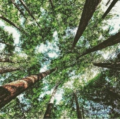Trees heal!